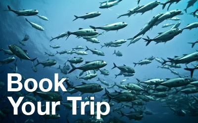 Book a SCUBA or snorkeling tour with Coiba Dive Center!
