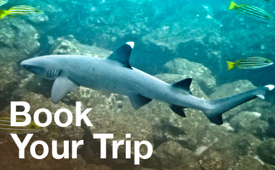 Book with Coiba Dive Center, Sharks Guaranteed!